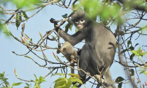 Celebrity Chefs Race To Be First To Cook New Species Of Monkey